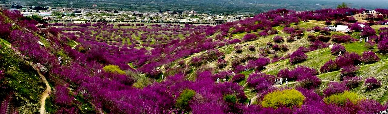 جشن گلها در افغانستان