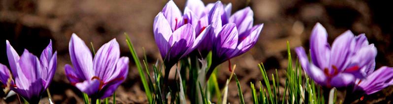افغانستان سرزمین گلها