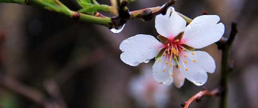 Flowers-in-spring