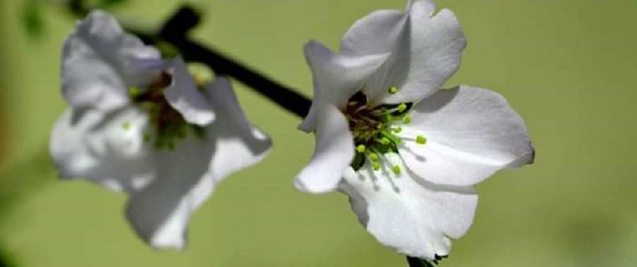 Flowers-in-spring10