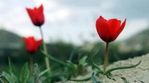 Flowers-in-spring2