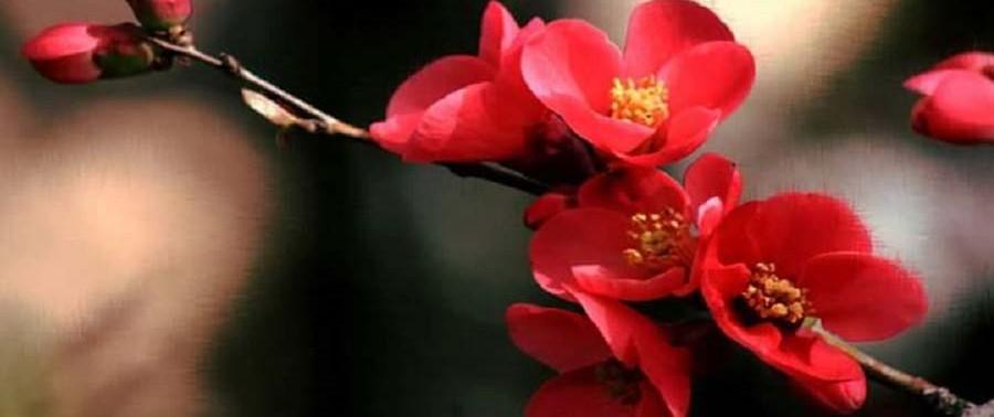 Flowers-in-spring4