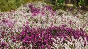 Flowers-in-spring5