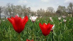 Flowers-in-spring6