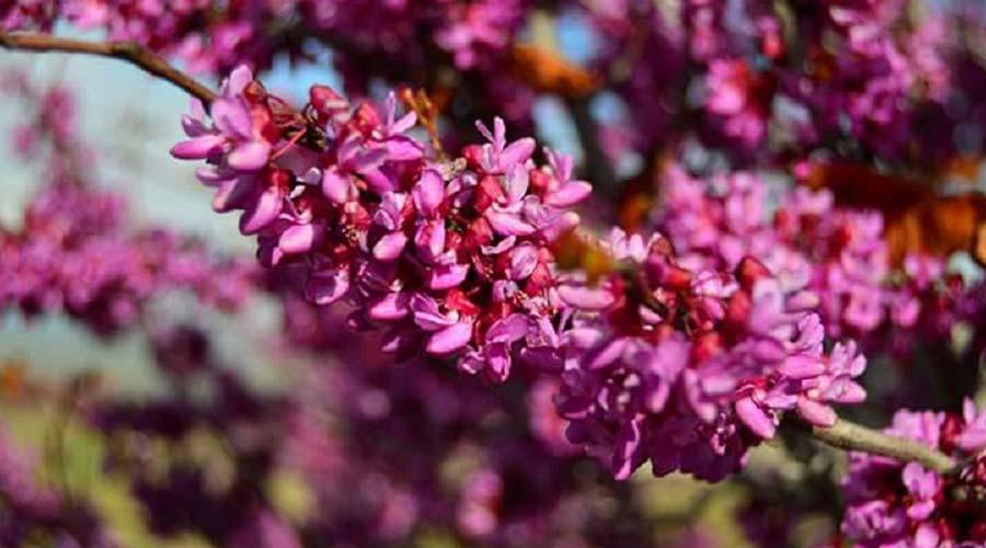 Flowers-in-spring7