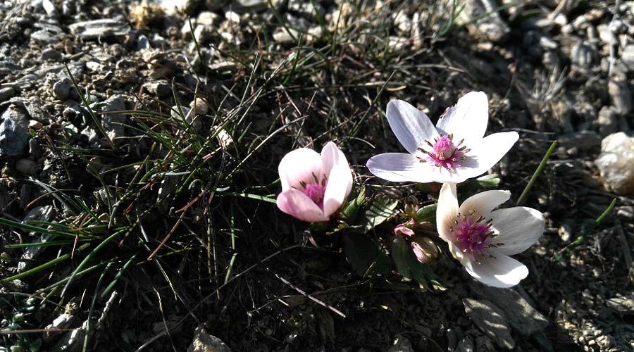 Flowers-in-spring8