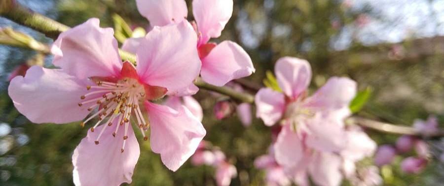 Flowers-in-spring9