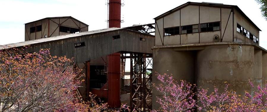 Jabaluseraj-plant