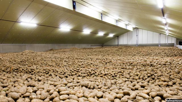 Potato in Afghanistan