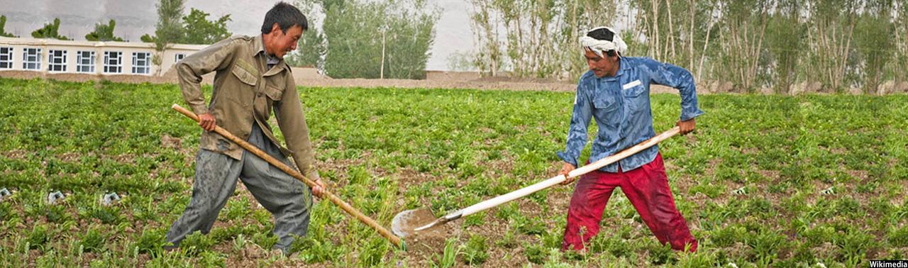 کشاورزان بامیانی سرمایه دارترین مردم این ولایت