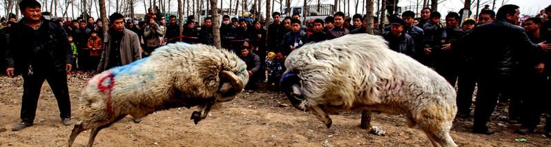 بازیهای سنتی؛ ۱۱ بازی محلی در افغانستان