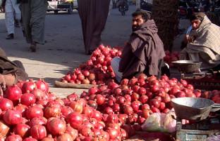 پاکستان مخرب؛ ۸ تدبیر برای صادارات میوه تازه افغانستان