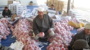 afghan-pomegranate