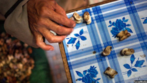 شیغی بازی بیشتر در مناطق مرکزی افغانستان مرسوم است