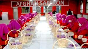 زعفران افغانستان در سه سال اخیر به صورت متواطر بهترین زعفران جهان شناخته شده است