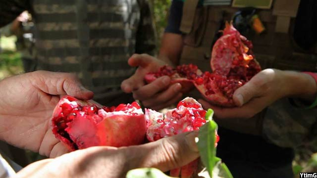 qandahar-pomegranate3