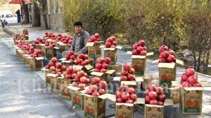 kandahar-pomegranate-market-in-kabul-3