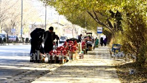 kandahar-pomegranate-market-in-kabul-5