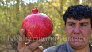 kandahar-pomegranate-market-in-kabul-7