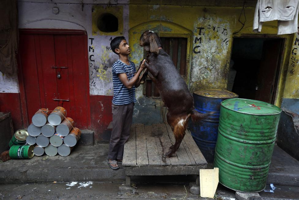 A boy plays with a goat at a roadside market in Kolkata, March 2, 2016.REUTERS/Rupak De Chowdhuri