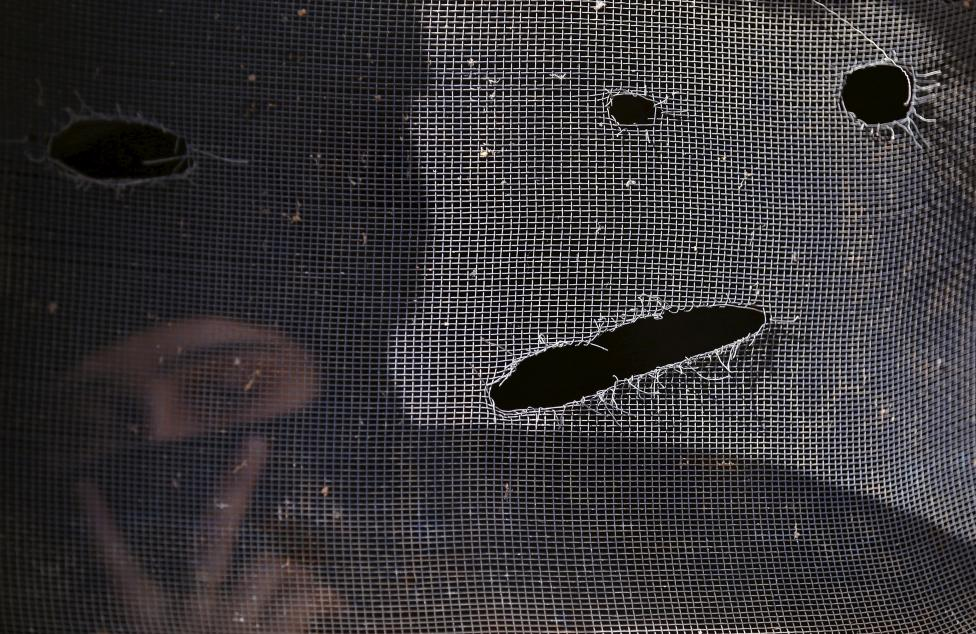 A Kashmiri Muslim woman looks through the damaged window of a residential house after a gunbattle in Dadsara village in south Kashmir March 3, 2016. REUTERS/Danish Ismail
