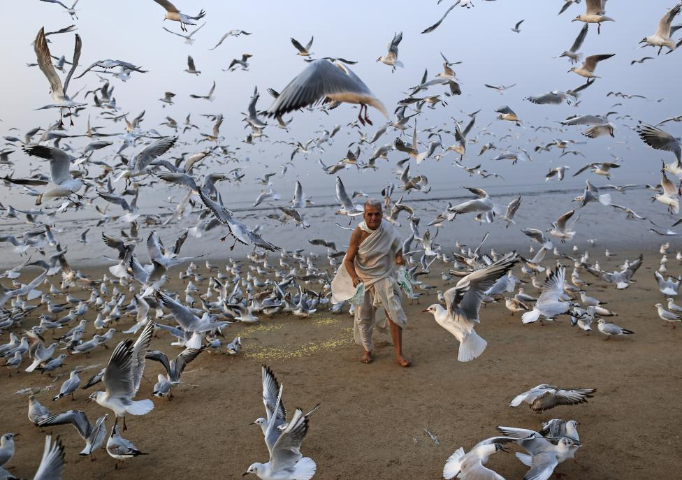 A man feeds seagulls on a beach along the Arabian Sea in Mumbai, February 9, 2016. REUTERS/Danish Siddiqui