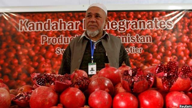 در سال جاری خورشیدی میوه های تازه افغانستان 30 درصد نسبت به سال گذشته افزایش داشته است
