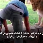 بازی مردی با شیر در باغ وحش، اما شانس با این مرد همراه است