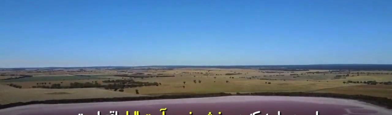-صورتی-در-بخش-غربی-استرالیا
