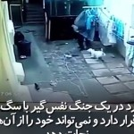سگ هایی که دزد را با مشکلات جدی رو به رو کرد