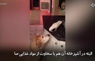 محبت طوطی به سگ خانگی