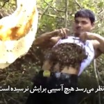 مرد هندی که هزاران زنبور را زیر لباس خود جمع می کند