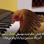 مرغ میهن پرست آمریکایی