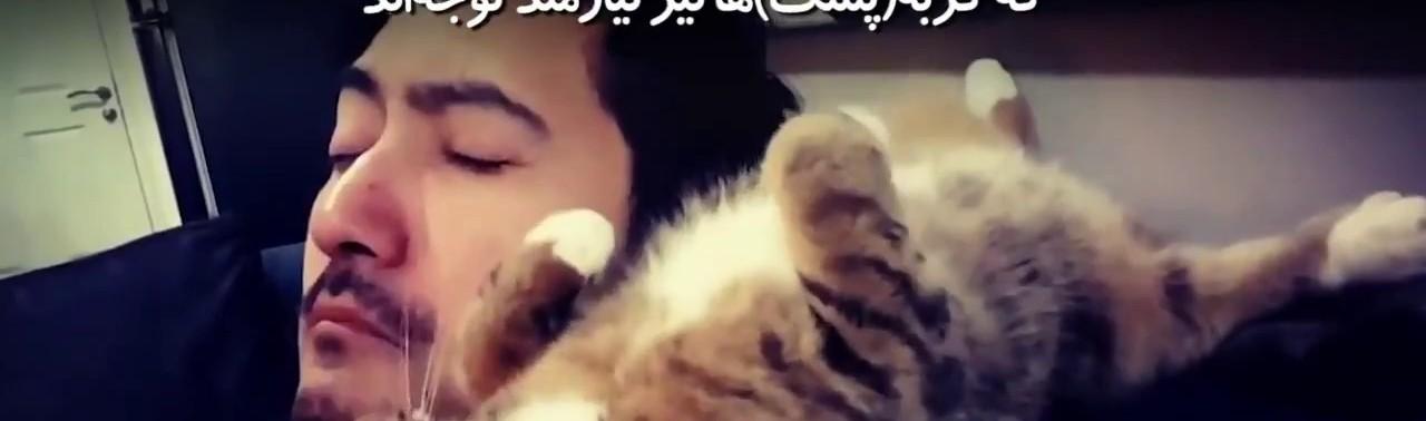 -گربه-از-حیواناتی-است-که-میخواهد-همواره-مورد-توجه-باشد