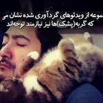 پشک (گربه) از حیواناتی است که میخواهد همواره مورد توجه باشد