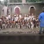 این سگها طوری آموزش دیدهاند که بدون اجازه صاحب خود به سراغ غذایشان نمیروند