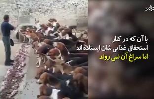 تربیت حتی روی سگهای شکاری نیز تاثیر میگذارد