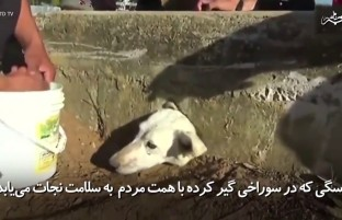 سگی که در سوراخی گیر کرده و با همت مردم به سلامت نجات می یابد