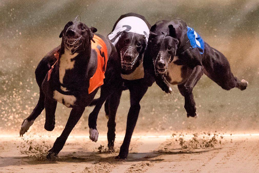 نمایی از مسابقه دوش سگ ها در شهر لندن انگلیستان. تصویر از Getty.