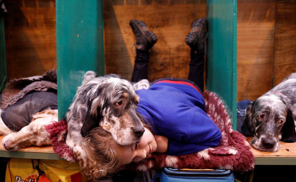 کیتی مککلافلین، دختر خردسال انگلیسی همراه با سگاش در روز سوم نمایش سگها در برمینگام انگلستان. تصویر از Reuters