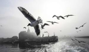 نمایی از پرواز مرغهای دریایی در بسفر ترکیه. تصویر از AFP