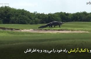 این تمساح شبیه گودزیلا بزرگ و وحشتناک است