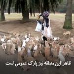 دختری که با دهها خرگوش دوست شده است