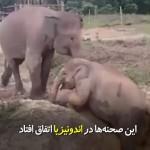 محبت یک فیل مادر به بچهاش که در جوی گیر کرده است