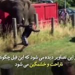ناراحتی و خشونت فیل را هیچگاهی نباید دست کم گرفت