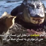 پیشکی که با جدیت در مقابل تمساح میاستد