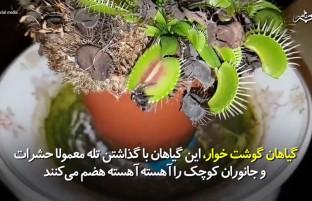 گیاهی که با گذاشتن تله حشرات و جانوران را میخورد