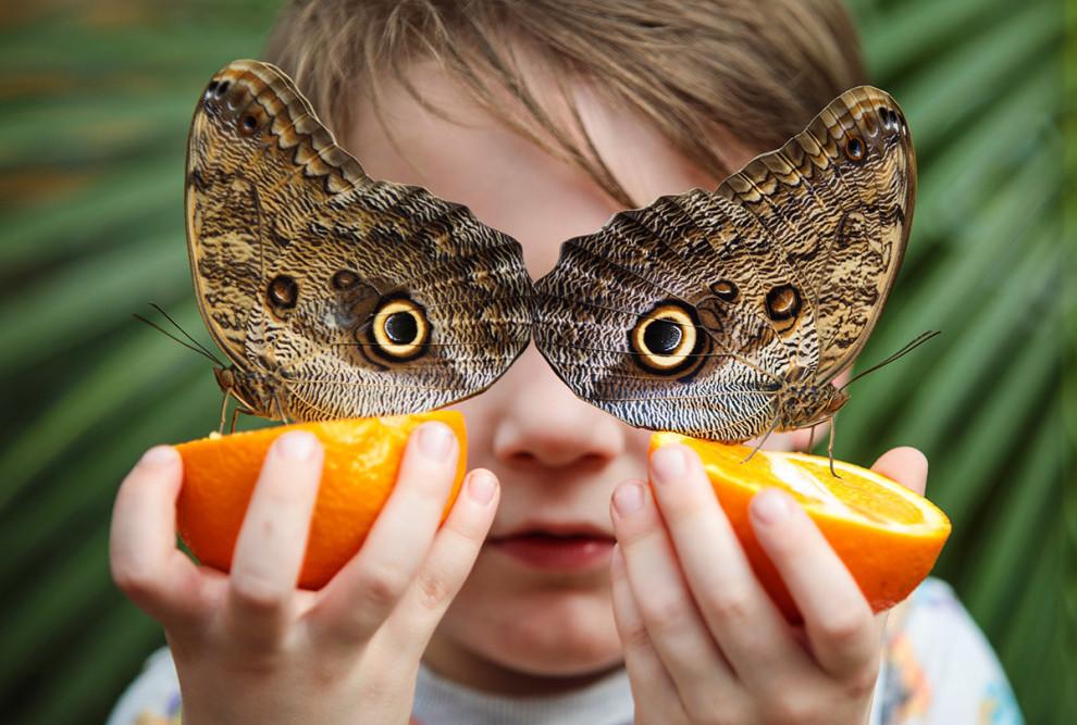 جورج لویس پنج ساله اهل لندن است. او یک پرتقال را از وسط نصف کرده بود و دو پروانهی وحشی پشت به هم از شربت آن میمکد. جک تیلور عکاس این تصویر نیز با خلاقیت فوقالعاده تصویری را شکار کرده که چشم نقش روی بال این پروانه ها، چشمهای جورج خطا میکند. این تصویر در روز آخر ماه مارچ گرفته شده است / عکس: گیتی