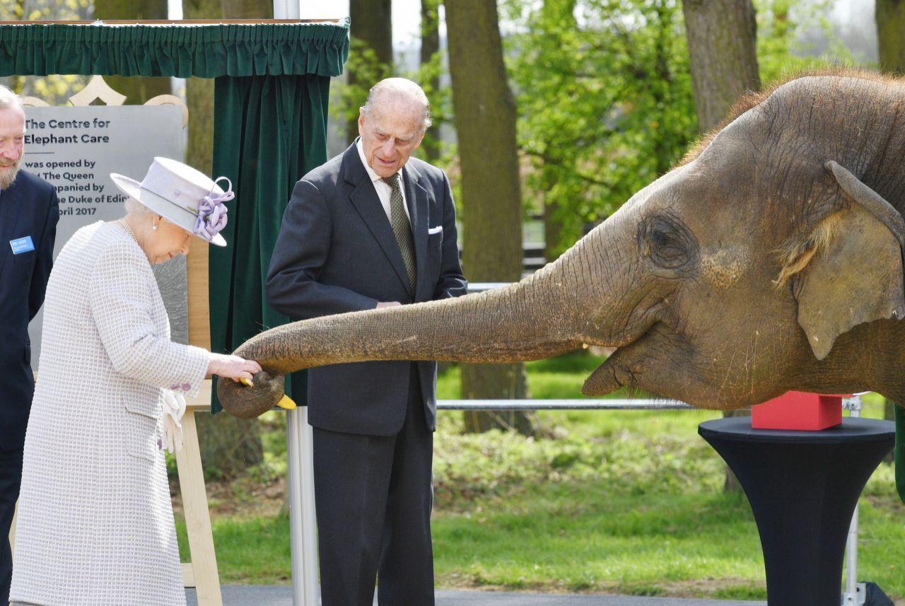ملکهی انگلستان در جریان دادن کیله (موز) به فیلی در باغ وحش ویپسند / عکس: ای پی