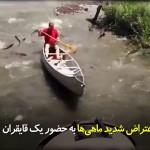 اعتراض شدید ماهیها به حضور یک قایقران